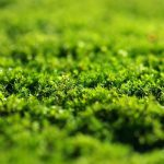 zielone ozdoby na ścianę mech